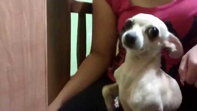 ¡Los perros odian los abrazos! ¿Lo sabías?