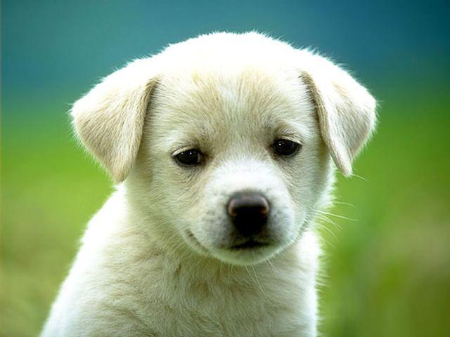 Perro le explica a su dueña lo que le paso luego de perderse