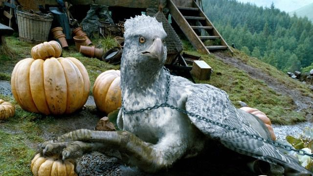 "Conoce al ave parecida a ""Buckbeak"", de Harry Potter"