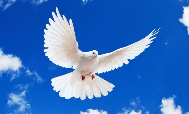 En honor al Día Internacional de la Paz...
