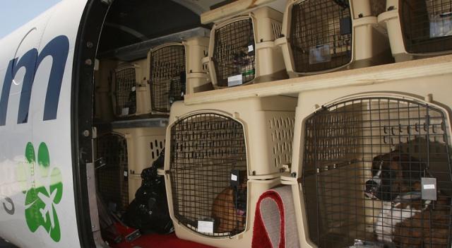 Aerolínea mexicana pierde la mascota de una pasajera y la búsqueda se hacer viral