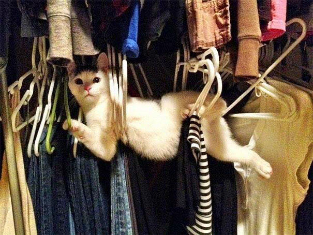Cuando los gatos tienen mala suerte