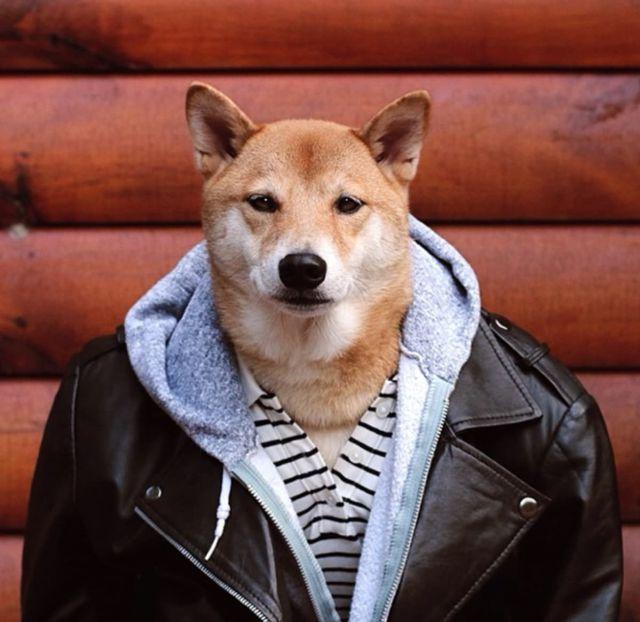 Los perritos más famosos que tenés que seguir en Instagram