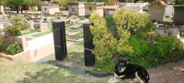 Igual que Hachiko, un perro muere en la tumba de su dueño