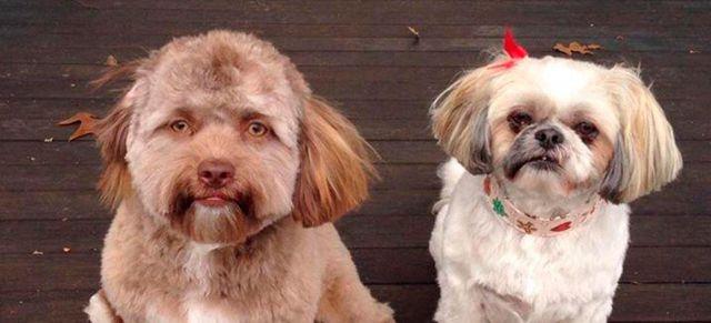 Un perro con cara de humano colapsó las redes sociales