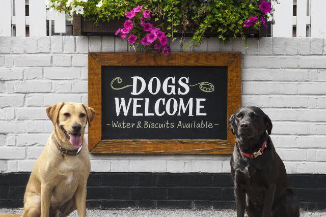 ¿Dónde puedo ir a pasear con mi mascota? Te tenemos una guía de lugares 'Pet Friendly'