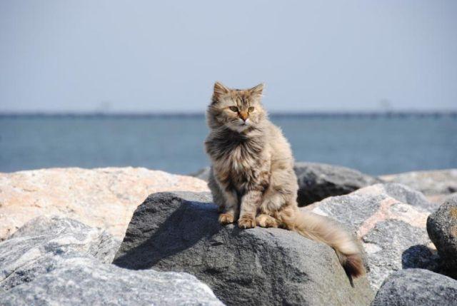 En esta isla te pagarán por cuidar gatos