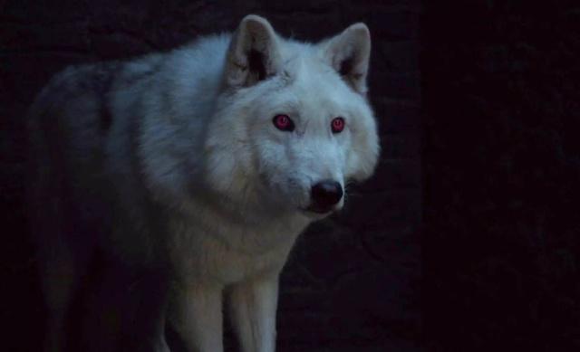 ¡Confirmado! El lobo de Jon Snow volverá para la octava temporada de GOT