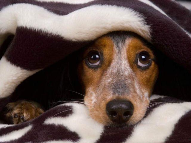 Este truco ayudará a que tu perro no se asuste con los juegos artificiales