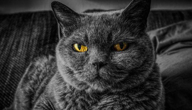 5 señales para detectar que tu gato te odia en secreto
