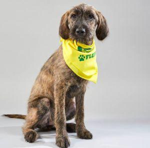 Marisol representó a Costa Rica en el Puppy Bowl de Animal Planet