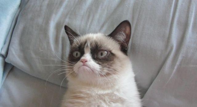 Falleció 'Grumpy Cat' a los 7 años de edad