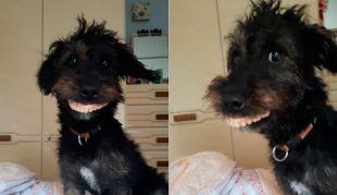 Perrito con la mejor dentadura provoca risas en redes sociales