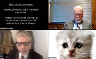 """""""No soy un gato"""": Abogado usa filtro de gato en audiencia y se hace viral"""